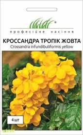 Семена кроссандры Тропик желтая, 4шт, Pan American, США, Професійне насіння, до 2019 фото
