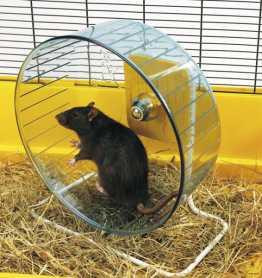 Тренажер колесо для хомяков и крыс Savic Rolly Giant+Stand, пластик, 27,5см фото
