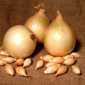 Семена лука-севка Центурион F1, 0.5кг, Broer, Голландия фото