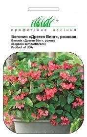 Семена бегонии Дреген Винг розовая, 5шт, Pan American, США, Професійне насіння фото