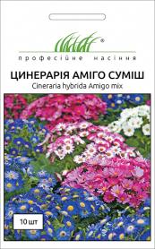Семена цинерарии цветущей Амиго, 10шт, Hem, Голландия, Професійне насіння фото