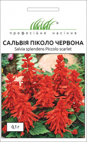 Семена сальвии низкорослой Пиколо красная, 0.1г, Hem, Голландия, Професійне насіння фото