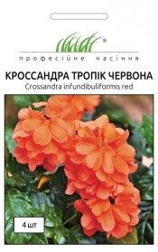 Семена кроссандры Тропик красная, 4шт, Pan American, США, Професійне насіння фото