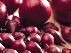 Семена лука-севка Ред Барон F1, 0.5кг, Голландия фото