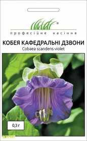 Семена кобеи Кафедральные звоны, 0.3г, Hem, Голландия, Професійне насіння, до 2019 фото
