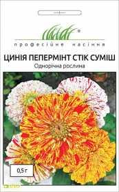 Семена циннии Пеперминт стик смесь, 0.5г, Hem, Голландия, Професійне насіння, до 2019 фото