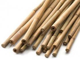 Бамбук декоративный, 120см фото