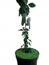 Декоративные камни для цветов, зеленые, в зип пакете, 1кг фото