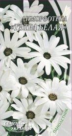 Семена диморфотеки Тетра белая, 0.3г, Семена Украины фото