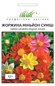 Семена георгины Миньон смесь, 0.2г, Hem, Голландия, Професійне насіння фото