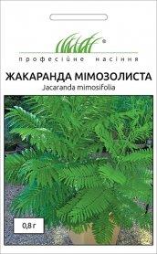 Семена жакаранды Мимозолистная, 0.8г, Hem, Голландия, Професійне насіння фото