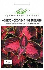 Семена колеуса Чоколейт Коверед чери, 5шт, Pan American, США, Професійне насіння фото