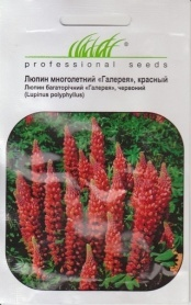 Семена люпина Галерея красный, 0.4г, Hem, Голландия, Професійне насіння фото