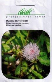 Семена мимозы стеснительной, 0.5г, Hem, Голландия, Професійне насіння фото